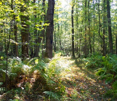 support our retreat center- wisconsin hiking trails